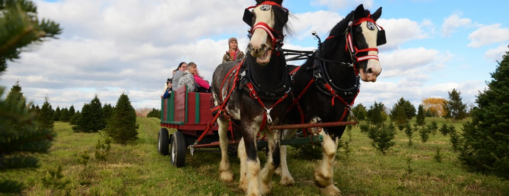 Horse_Drawn - Ohio Christmas Tree Association